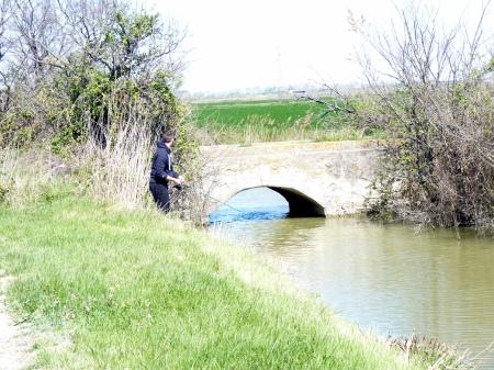 camargue petit pont