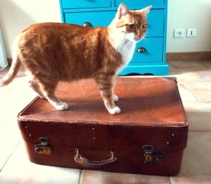 valise cuir + chat