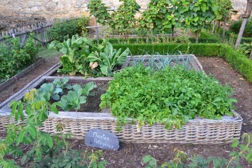 vegetable-garden-890625_960_720