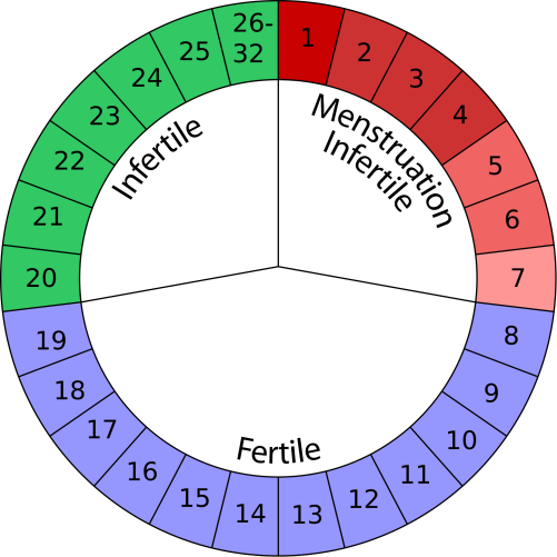 cycle-mensuel